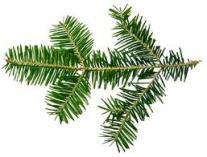 Christmas_firbranch